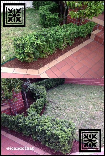 plants copy