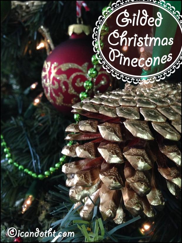 pinecones 6