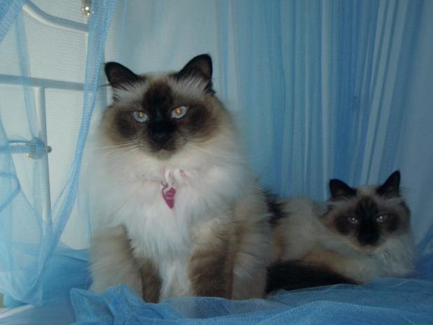 thumb_Cats 004_1024