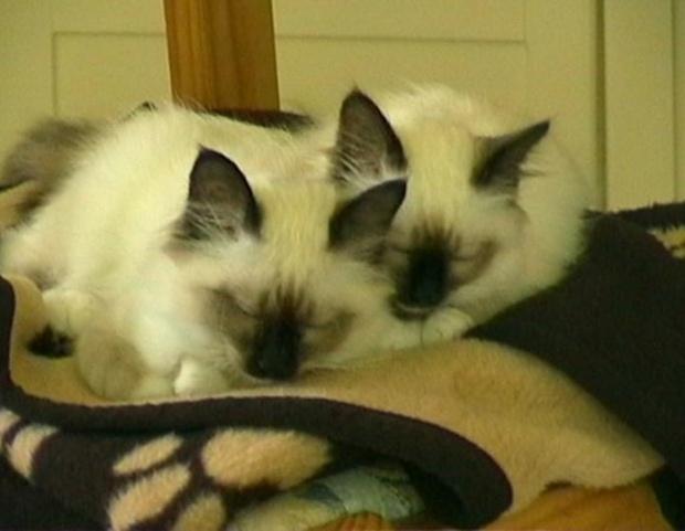 thumb_kittens (15)_1024