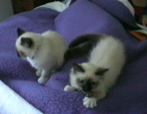 thumb_kittens (2)_1024