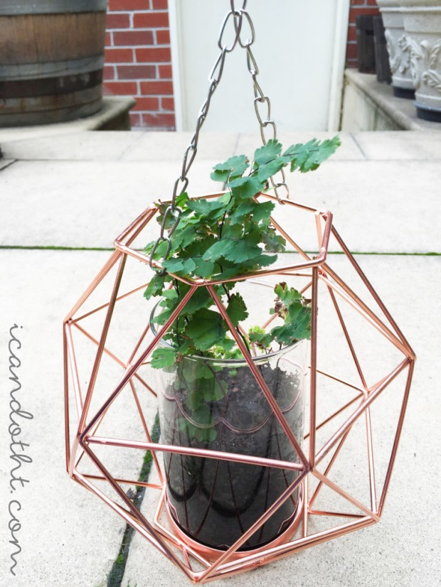 Fern planter DIY hanging