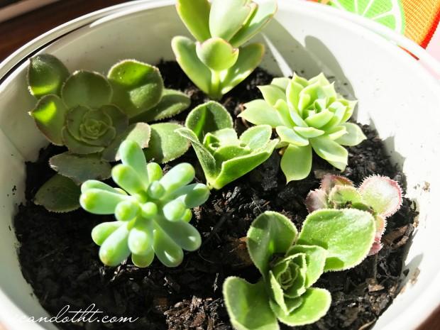 succulent-planter1