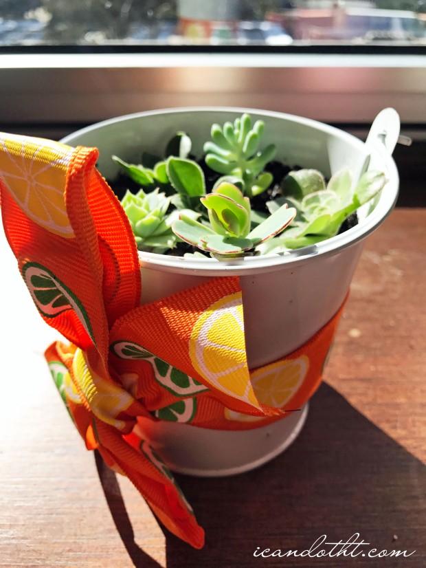 succulent-planter2