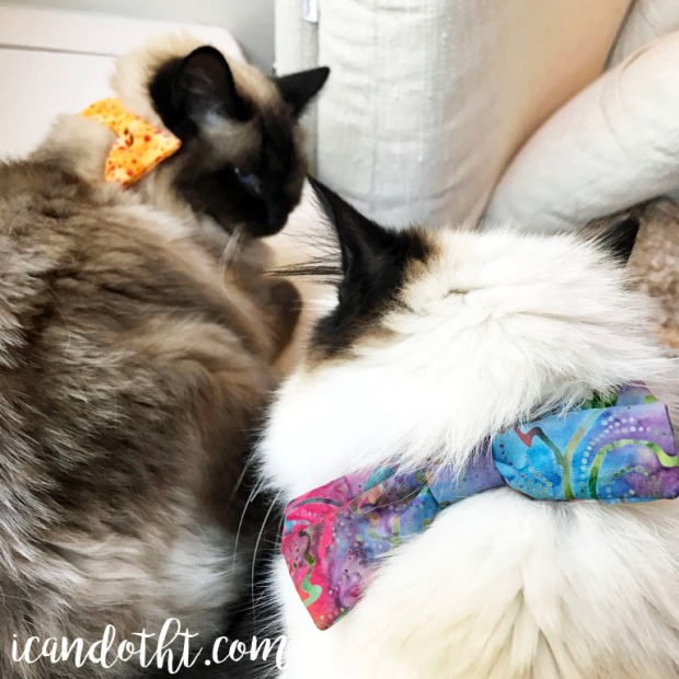 cats-wearing-cat-bows
